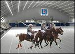 arena_polo