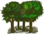 skog3b_thumb.jpg