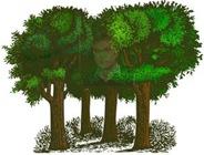 skog3b