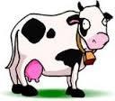 cow2_thumb.jpg