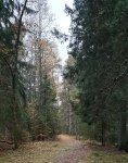 mariedal_skog