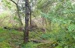 pafagelskogen5