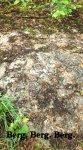 pafagelskogen6